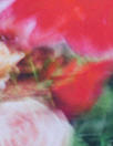 Italian floral impressions cotton poplin