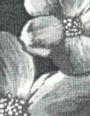Italian digital viscose knit - newsprint blossoms
