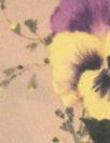 NY designer pansies crepe back satin - dusty blush