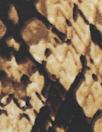 NY designer digital viscose knit panel - 'reptile repartee'