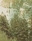 Italian forest edge viscose/spandex panel knit
