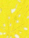Monique Lhui11er leaf design guipure lace - lemon