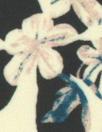 Rebecca Tayl0r dreamy petals matte hybrid - cream