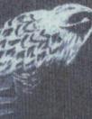 Rebecca Tayl0r bird sketch stretch silk chiffon - navy