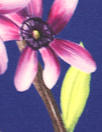 NY designer botanical silk 3-ply silk