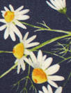 Dutch Oekotex cotton poplin for masks - chamomile on navy